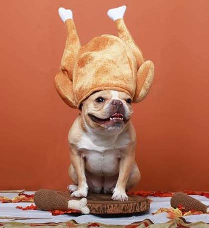 Pet Safety Tips Thanksgiving
